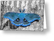Male Moth Light Blue Greeting Card