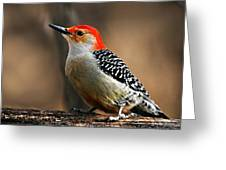 Male Red-bellied Woodpecker 4 Greeting Card