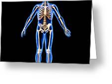 Male Skeleton, Artwork Greeting Card