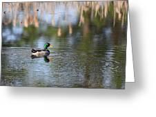 Mallard - Duck - Lonely Guy Greeting Card