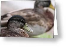 Mallard - Front And Rear Greeting Card