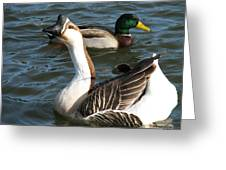 Mallard And Chinese Swan Goose - Anser Cygnoides - Featured In Wildlife Group Greeting Card
