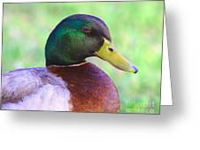 Mallard Drake In Shade Greeting Card
