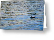 Mallard Duck And Blue Water Greeting Card by Marianne Campolongo