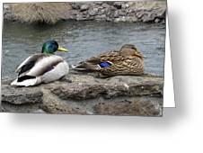 Mallard Duck Couple Greeting Card