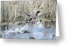 Mallard Duck Flying Greeting Card