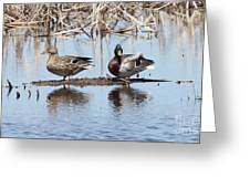 Mallard Ducks Sitting On A Sandbar  Greeting Card