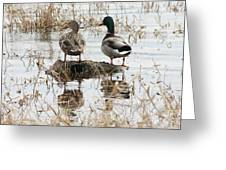 Mallard Ducks Standing On A Rock Greeting Card