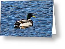 Mallard Swimming Greeting Card