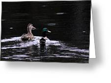 Mallards - Like Walking In The Rain Greeting Card