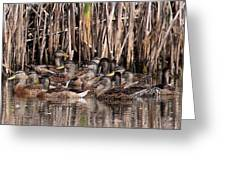 Mallards - Under Mothers Wing Greeting Card