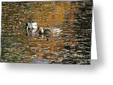 Mallards In Autumn Greeting Card
