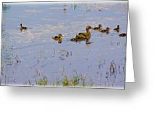 Mama Duck And The Kiddies Greeting Card