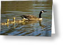 Mama Honker And Goslings Greeting Card