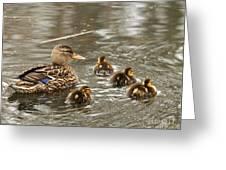 Mama Mallard With Babies Greeting Card by Deborah  Smith