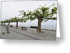 Man With Dog Walking On Empty Promenade With Trees Greeting Card