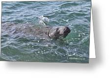 Manatee At Ponce Inlet Greeting Card