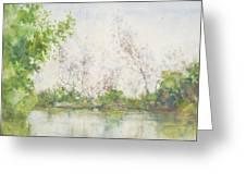 Mangrove Swamp Greeting Card