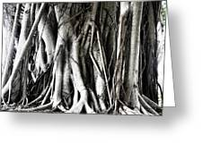 Mangrove Tentacles  Greeting Card