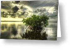 Mangroves I Greeting Card