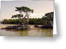 Mangroves In The Everglades Greeting Card