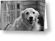 Mans Best Friend Greeting Card