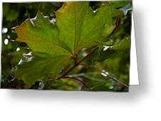 Maple 3 Greeting Card