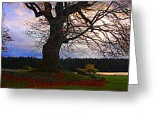 Maple Evening Greeting Card