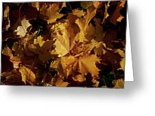 Maple In Fall Greeting Card