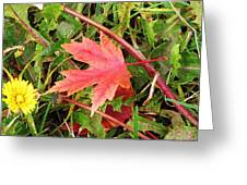 Maple Leaf Forever Greeting Card