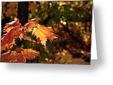 Maple Leaf Glow Greeting Card by James Hammen