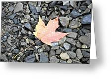 Maple Leaf In The Rain Greeting Card