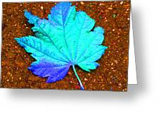 Maple Leaf On Pavement Greeting Card
