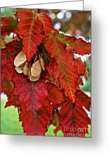 Maple Leaves And Seeds Greeting Card
