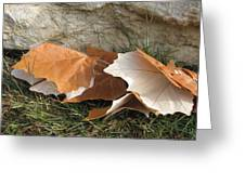 Maple Leaves Contrasted Greeting Card