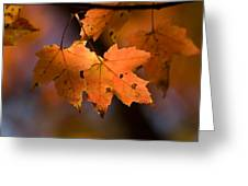 Maple Leaves In The Fall In Middlebury Greeting Card