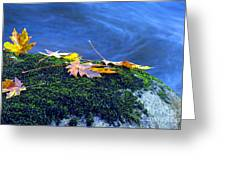 Maple Leaves On Mossy Rock Greeting Card