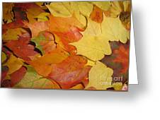 Maple Rainbow Greeting Card