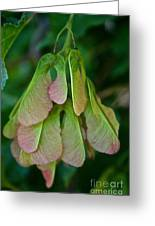Maple Seed Greeting Card