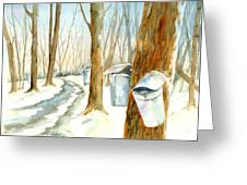 Maple Trail Greeting Card