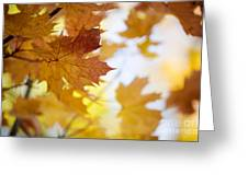 Maple Tree In Autumn Greeting Card