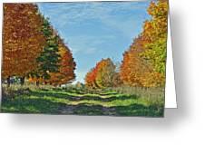Maple Tree Lane Greeting Card