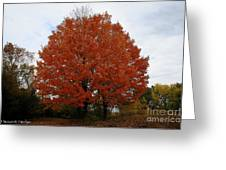 Maples In The Meadow Greeting Card