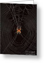 Marbled Orb Weaver Spider Greeting Card