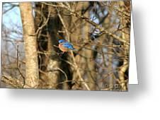 March Bluebird Greeting Card