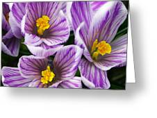 March's Gift Greeting Card