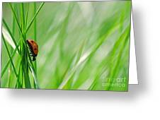 Ladybug In The Meadow Greeting Card