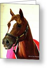 'marigo In Red' Greeting Card by PJQandFriends Photography