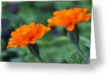 Marigold Duo Greeting Card