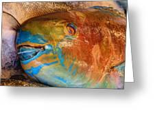 Market Fresh Fish Greeting Card